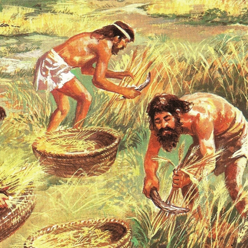 neolitico agricultura