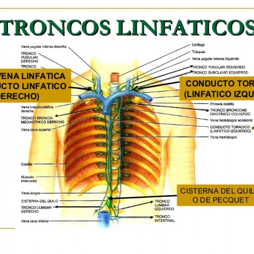 LA FUNCIÓN DE NUTRICIÓN: APARATO CIRCULATORIO - Pictoeduca