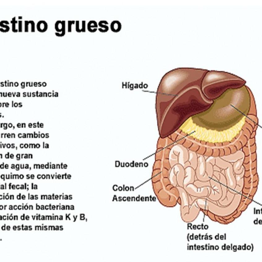 LA FUNCIÓN DE NUTRICIÓN: APARATO DIGESTIVO - Pictoeduca