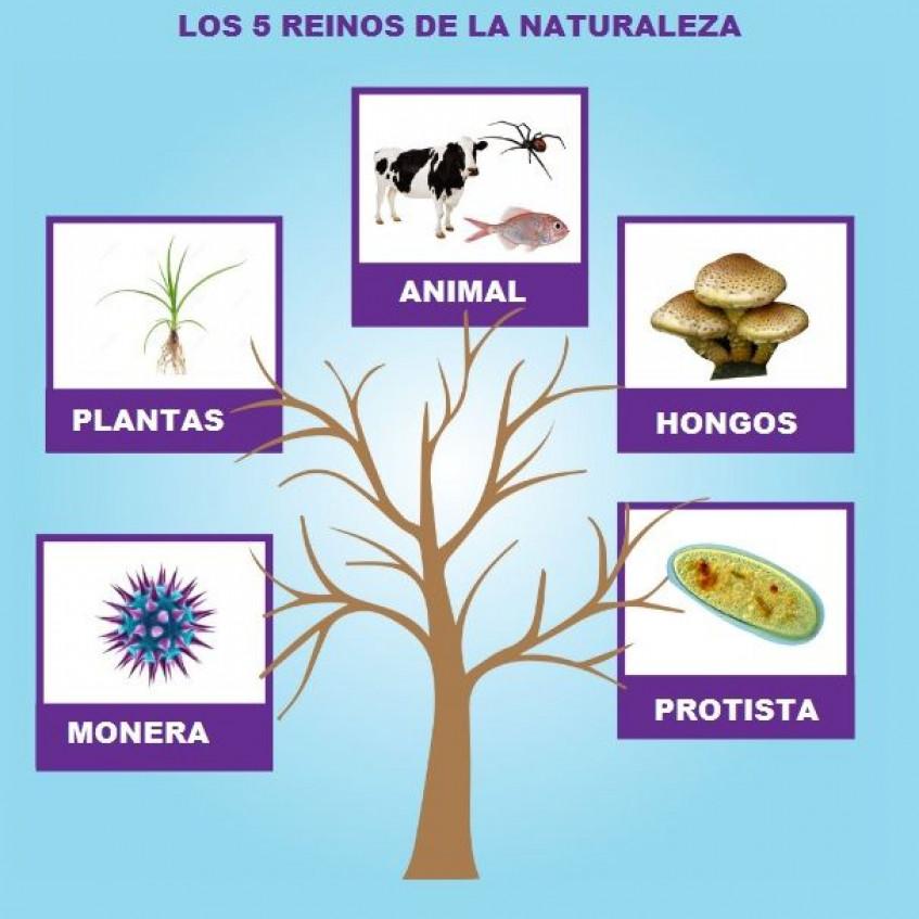 Reinos De La Naturaleza Pictoeduca